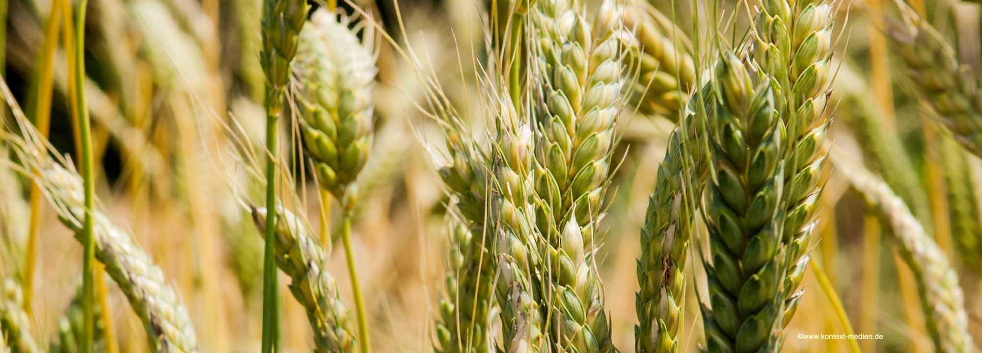 AC-Umwelttechnik – Effektive Mikroorganismen in der Landwirtschaft